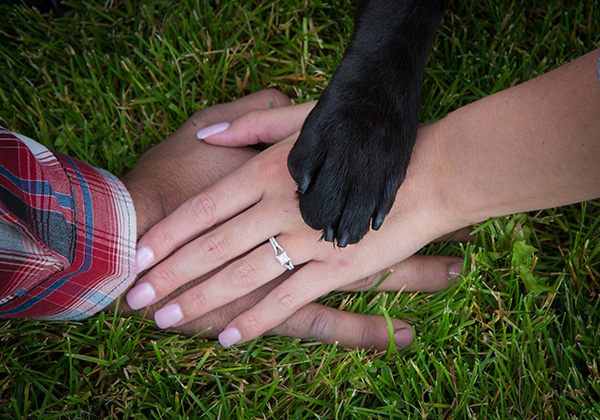 hands, rings, and a paw